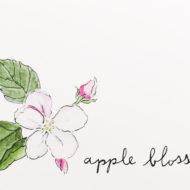 Appleblossomdetail