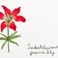 Saskatchewandetail