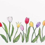 Tulipsdetail