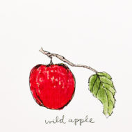Wildappledetail