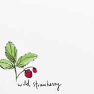 Wildstrawberrydetail
