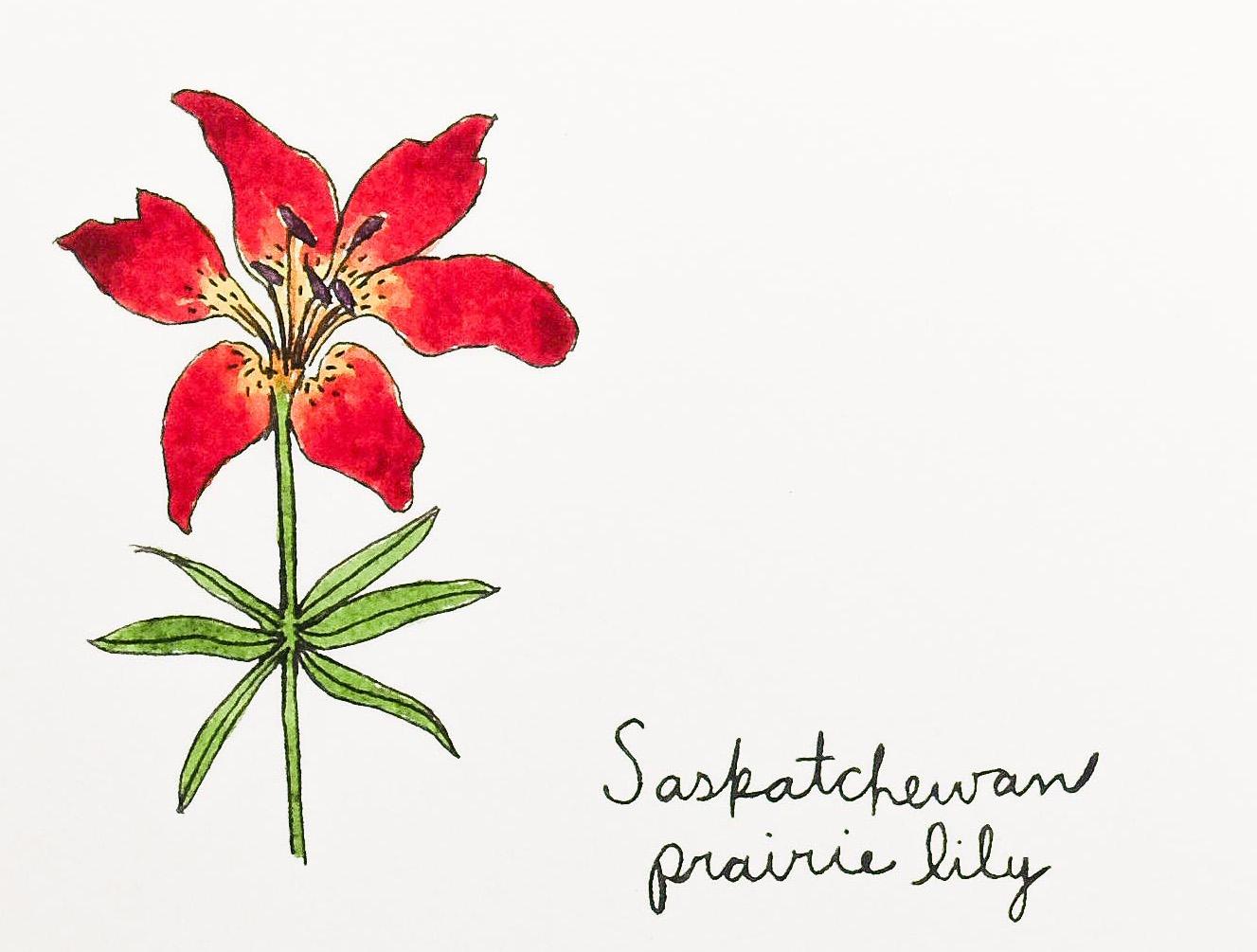 Saskatchewan Prairie Lily Box Of 8 Field Day Paper